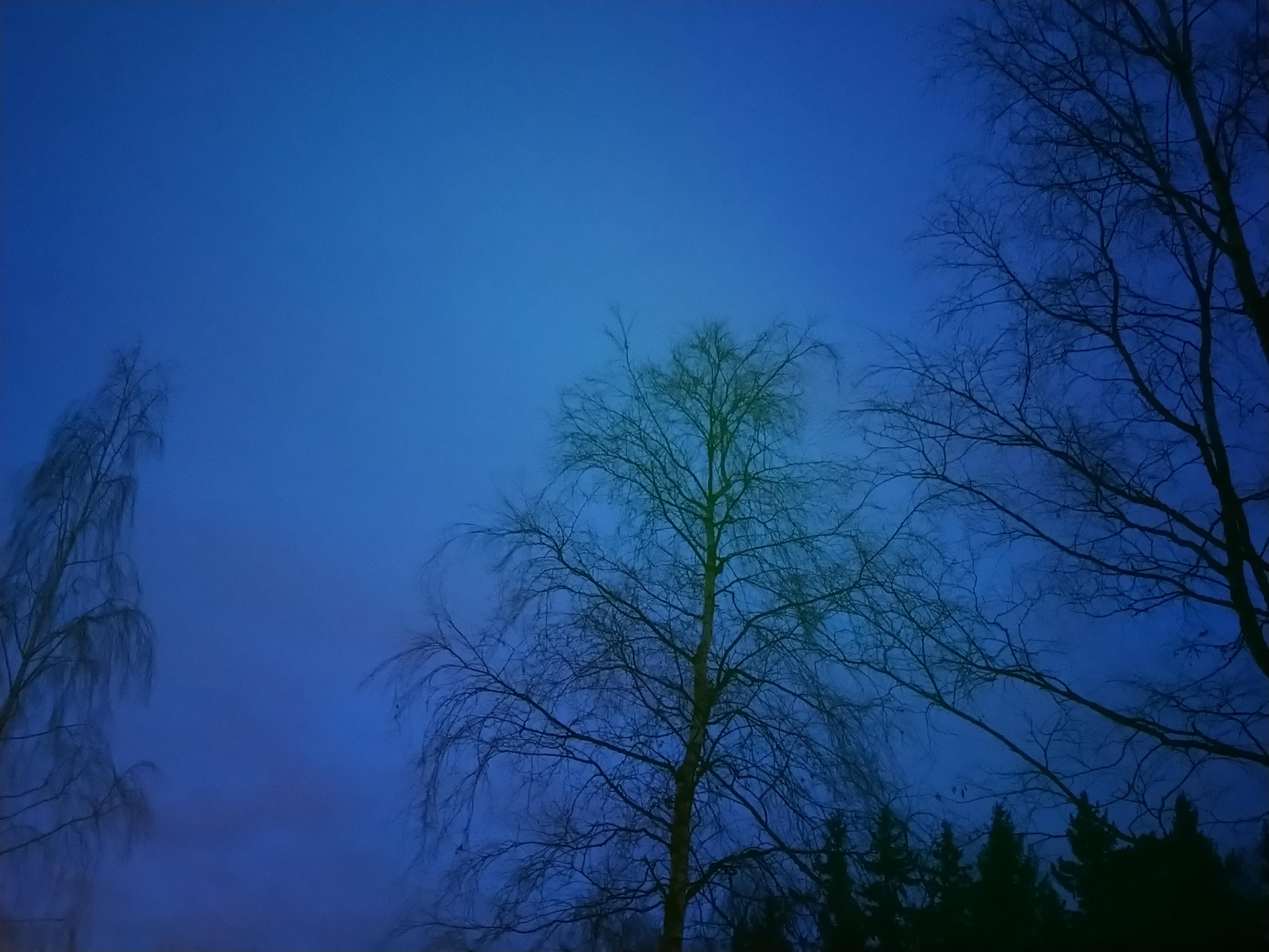 Joulukuinen maisema koivusta ja sen lehdettömistä oksista aikaisin aamulla.